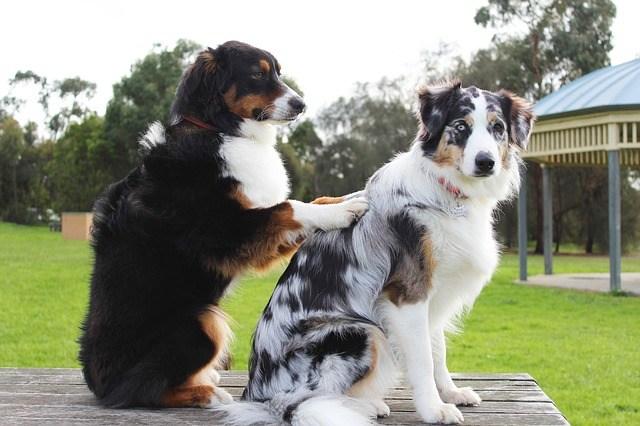 Massage honden